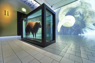 Der »Widder-Raum« mit Damien Hirsts »Black Sheep with Golden Horns« (2009)