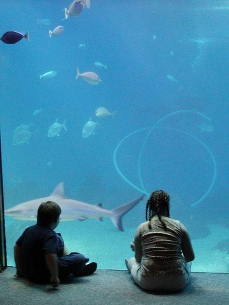 Silhouetten vor einem Aquarium