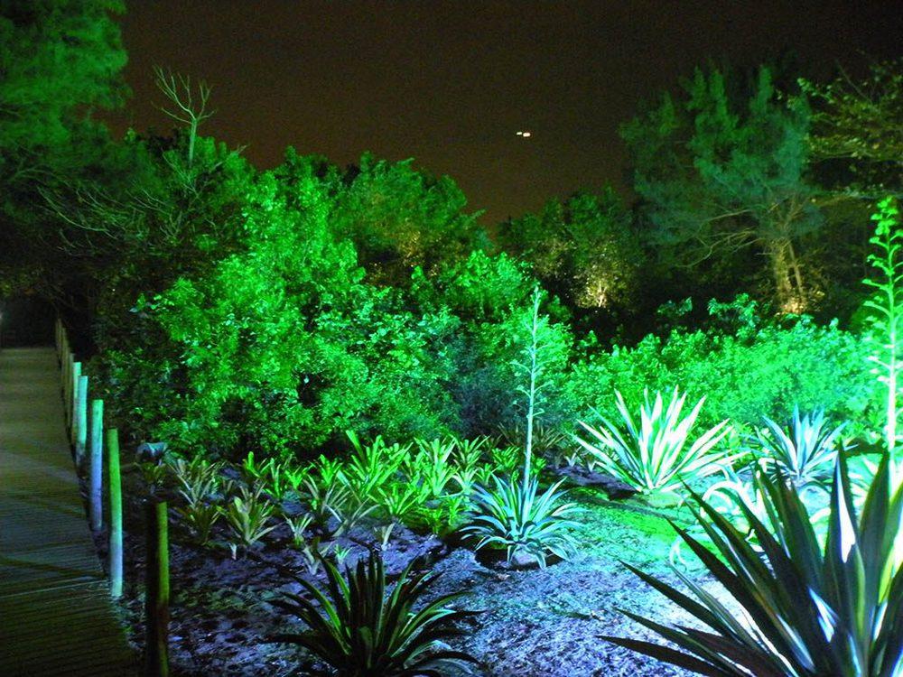 Beleuchtungskonzept für den Dschungel