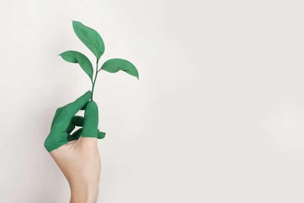 Nachhaltigkeit-grün-green-blatt