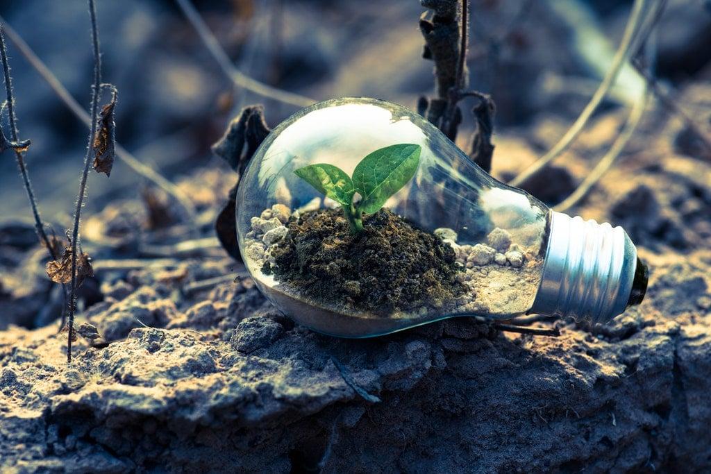 Nachhaltigkeit-Green-Event-Glühbirne