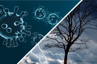 Collage aus einem Bild auf dem Coronaviren zu sehen sind sowie einem Bild auf dem ein Baum mit einem Unwetter im Hintergund sichtbar ist.