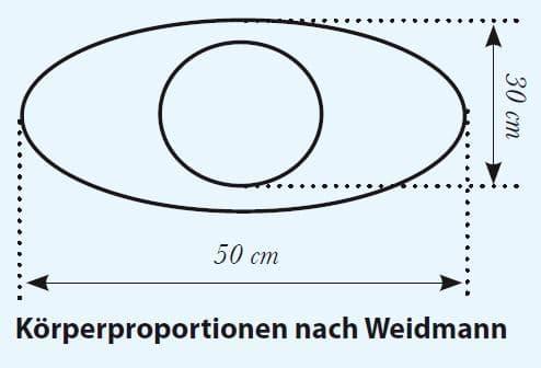 Körperproportionen nach Weidmann